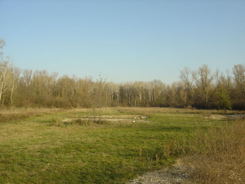 Petite prairie sur l'Île de la Table Ronde