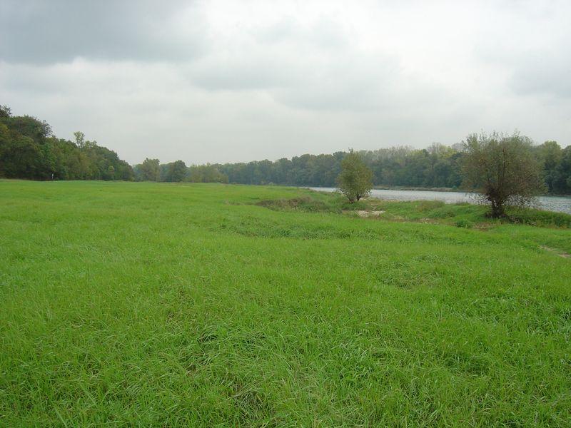 Prairie de la zone de grand écoulement de Vernaison