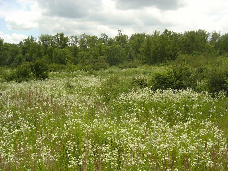 Zone appelée pelouse arborée sur l'Île de la Table Ronde